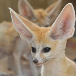 I'm all ears.