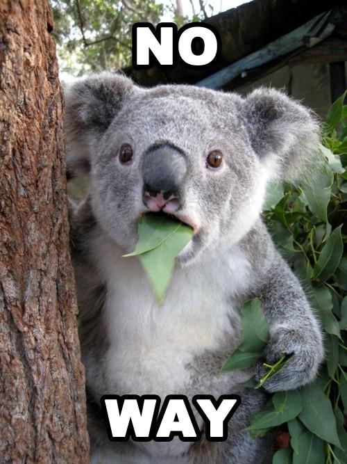 koala no way